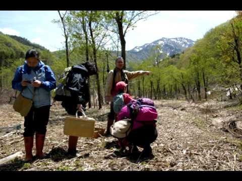 2012年春の山菜狩り.mov