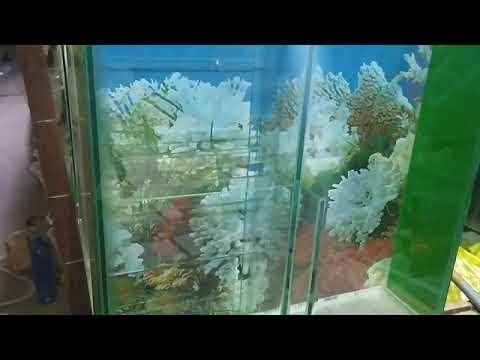 Cara kerja aquarium filter samping/ belakang