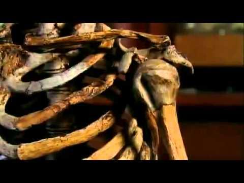 Neanderthals  Human Extinction   BBC Documentary