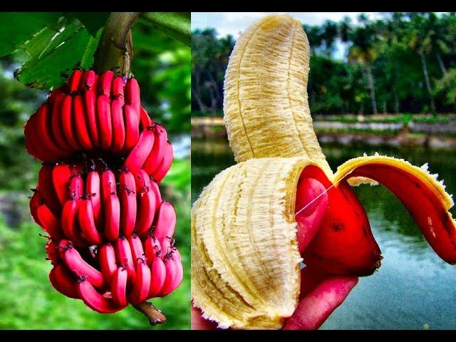 15 World's Strangest Fruits Standard quality (480p)