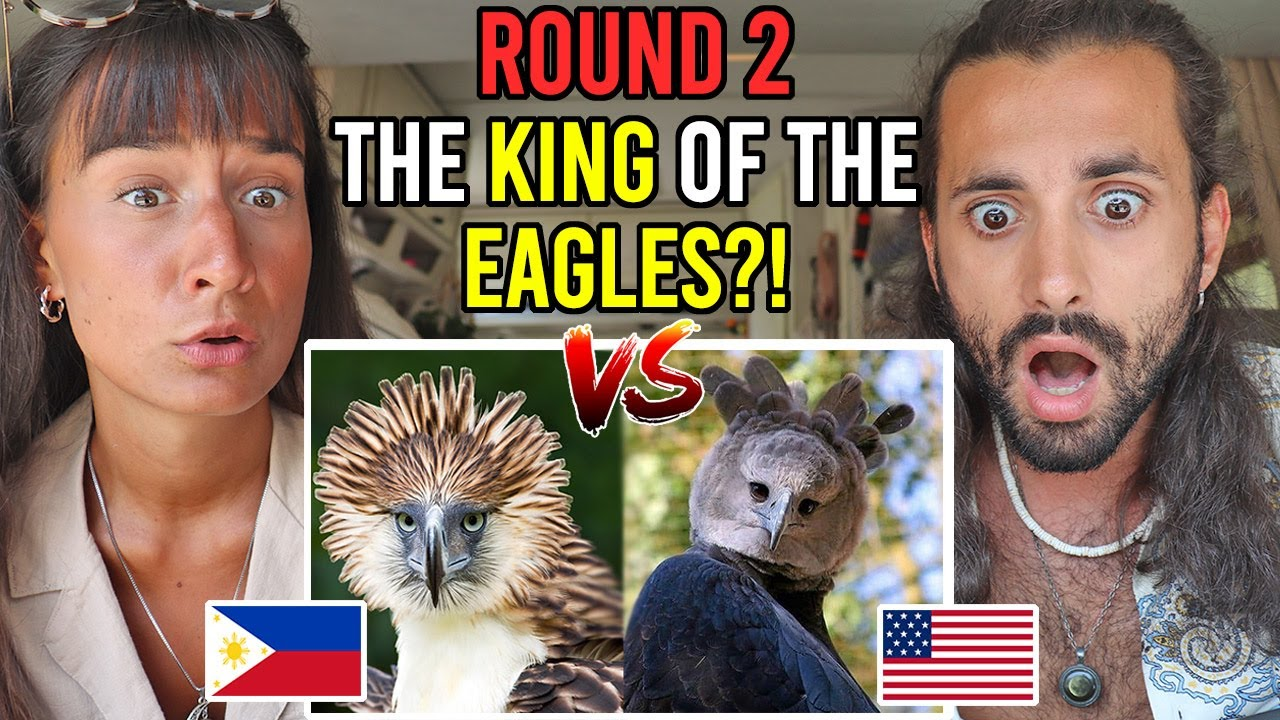 ROUND 2: PHILIPPINE EAGLE vs HARPY EAGLE - Who is the KING of the EAGLES?