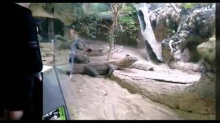 Reptile House Turtle Back Zoo NJ