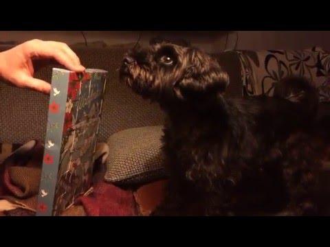 Kira Gets Advent Calendar - Woofmas