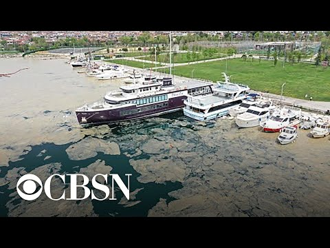 """Sea snot"" clogs up Turkey's Marmara Sea"