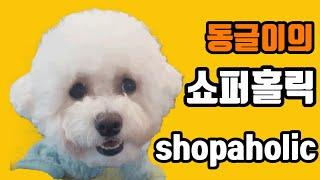 [반려견] 비숑 동글이의 쇼핑 아이템 공개 | 강아지 …