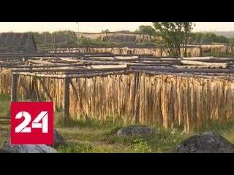 В Архангельской области начали заготовку водорослей