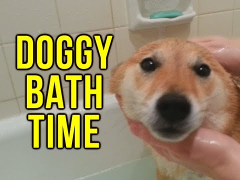 Doggy Bath Time