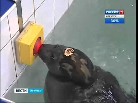 Russian Navy Seals.webm