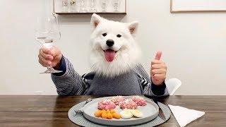 레스토랑에 혼밥하러 간 강아지