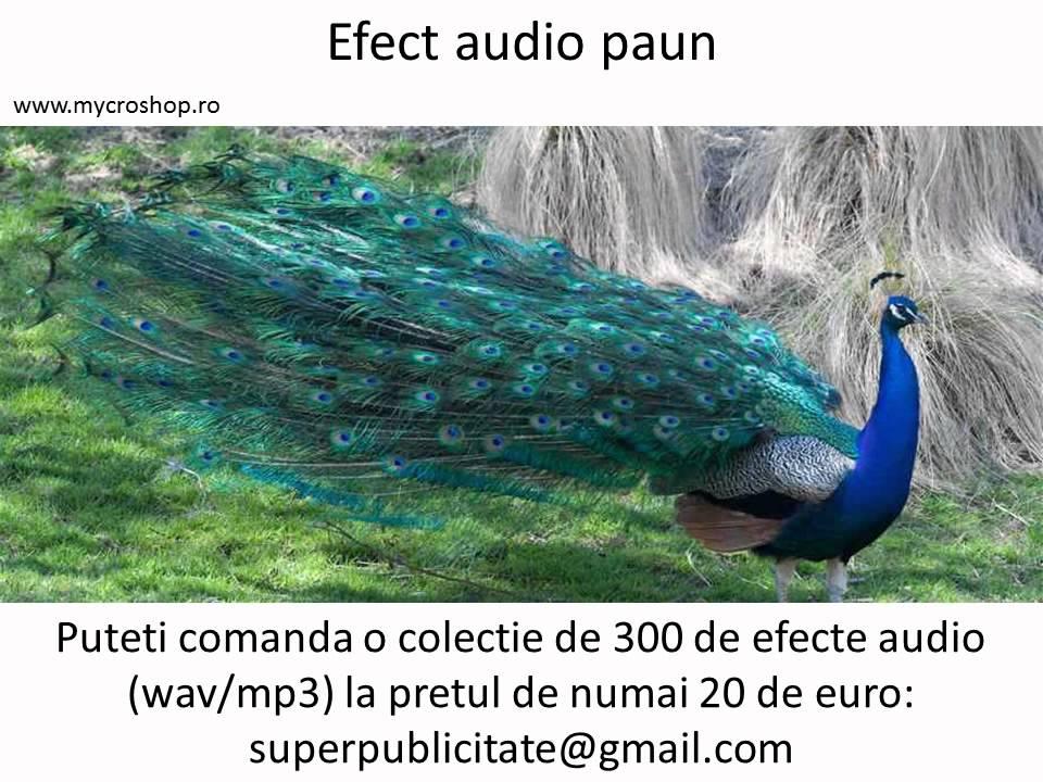 Efect audio paun. Peacock sound effects. - YouTube