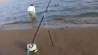 Шардара рибалка 2018
