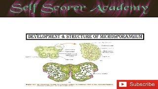 Microsporangium Development || Anther wall layers