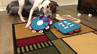 Boxer Dog Tater Works Nina Ottosson Food Puzzles 2