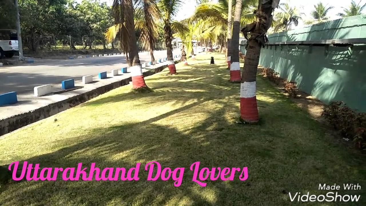 Uttarakhand Dog Lovers Dog Training And Boarding School Haldwani