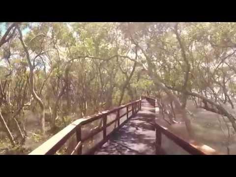 GOPRO HERO 4 BLACK: Australia Wynnum Mangrove Boardwalk