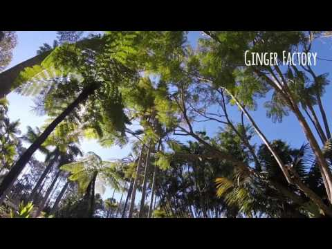 GoPro || noosa beach & ginger factory || travel video 02