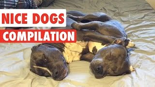 Nice Dogs Video Compilation 2016