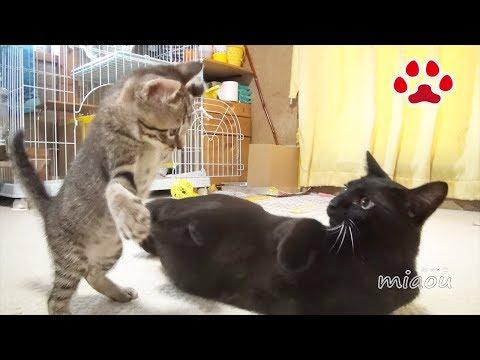 そろそろ黒猫も絡んでおくか Kuro and  Leo