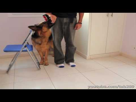 """How To Clicker Train """"Heel"""" Position (Dog Training)"""