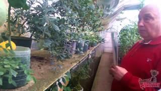 видео Екскурсія на бананову ферму