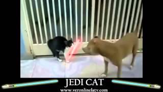 Коты с лазерными мечами класс!