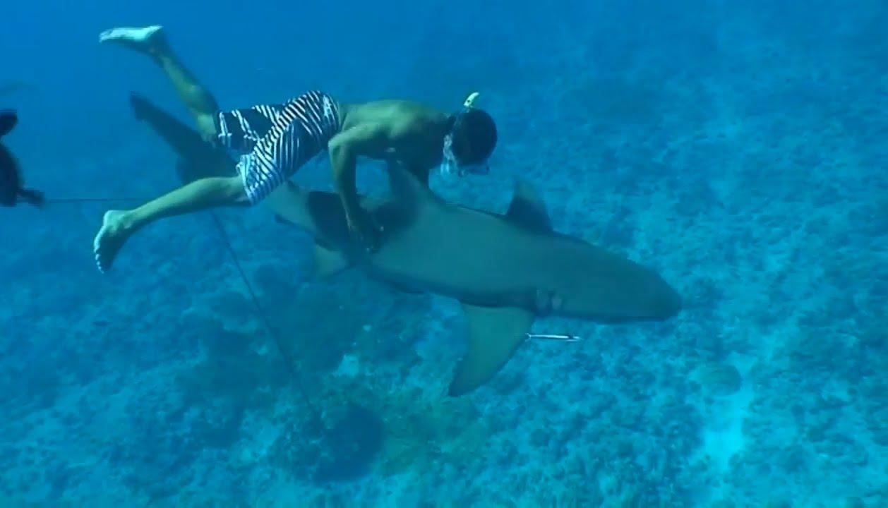 Swim With Sharks Rays Snorkeling Tour From St Regis Resort Bora Honeymoon