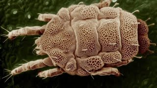 Вещи под микроскопом (часть 5) #folow4folow #микроскоп #интересно #познавательное #прикольно