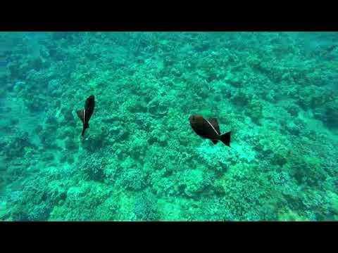 Snorkeling Molokini, Maui, Hawaii