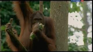 Из жизни животных/BBC