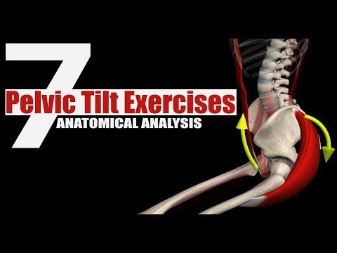 7 Pelvic Tilt Exercises | Anatomical Analysis