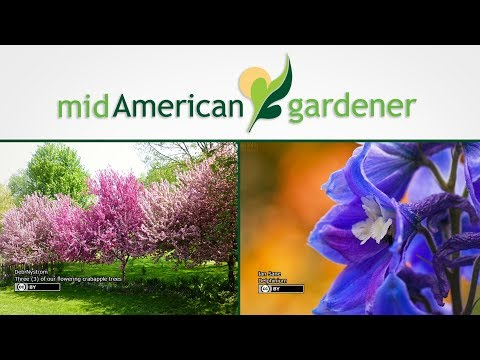 Mid-American Gardener with Dianne Noland August 10, 2017