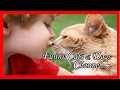 Funny dog and cat memes -Funny girl cat names-Funny Videos Dogs and Cats