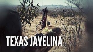 West Texas Javelina