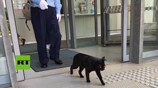 VIRAL: Gatos llevan 2 años intentando entrar a un museo de Japón