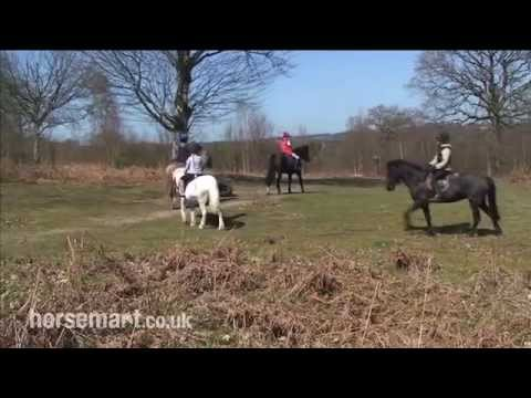 Welcome to Petley Wood Equestrian Centre, East Sussex