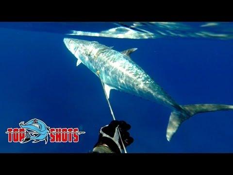 Pole Spear World Record - King Mackerel, Kingfish