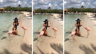 Flamingo Tries To Eat Tourists Hat