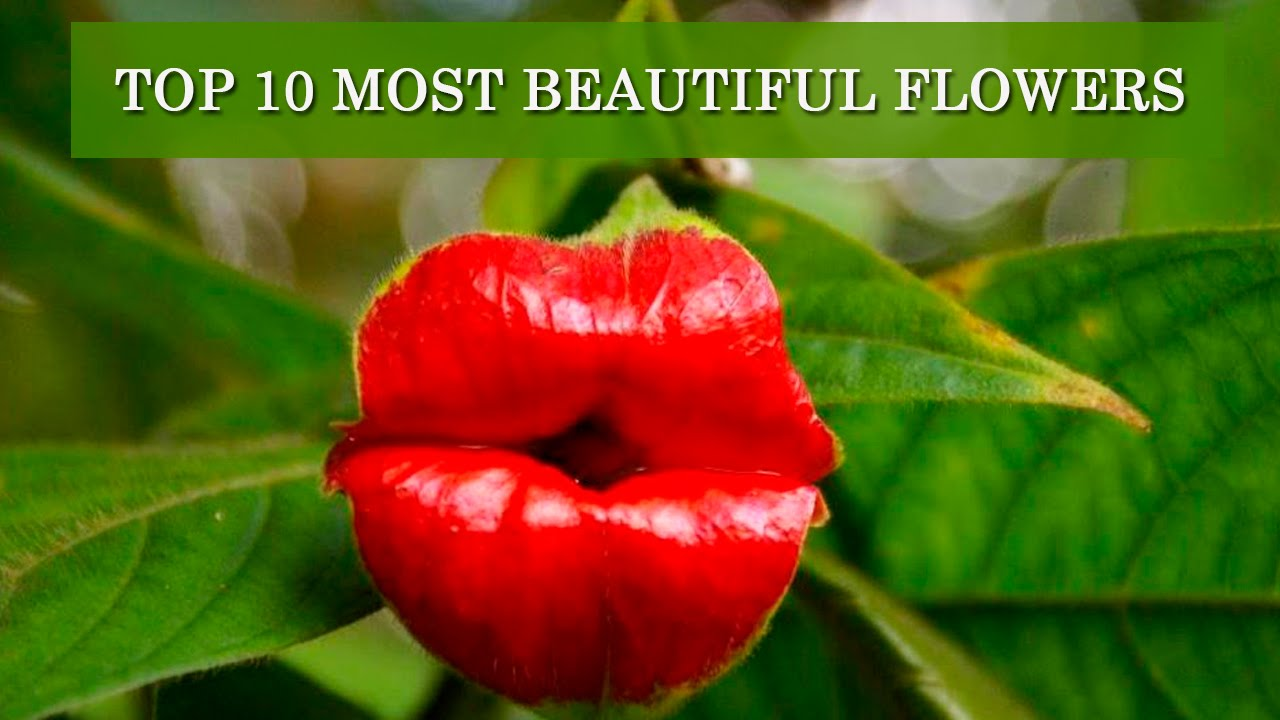 Top 10 Most Beautiful Flowers In The World Youtube