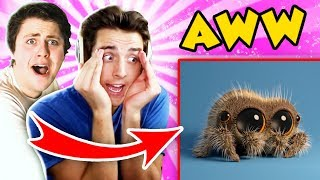 THE PALS TRY NOT TO AWW! Lucas the Spider & more! (The Pals React)
