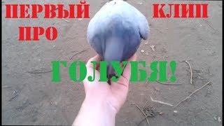 Первый в мире клип про голубя!
