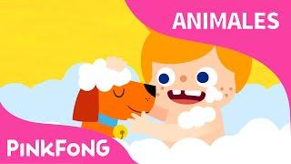 Mi Mascota, Mi Amigo | Animales | PINKFONG Canciones Infantiles