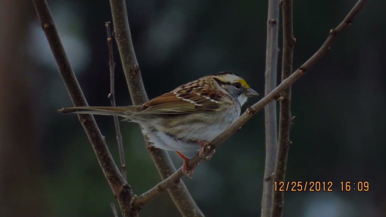 Slide Show Of Some Of My Bird Photos >> My Photos Bird Slideshow Taken With Canon Powershot Sx50 Hs Youtube