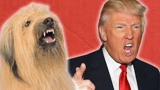 Presidential Candidates And Their Dog Twins