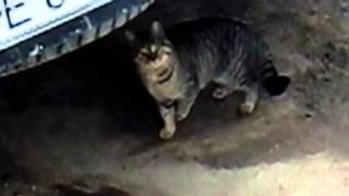 Кошки трахаються атырау