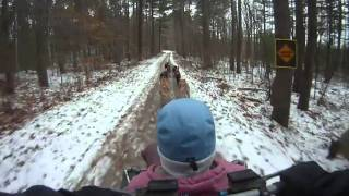 Sled Dog Winter Training