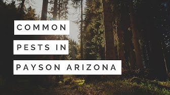 Common Pests in Payson AZ