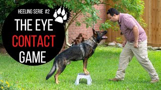 The eye contact game | Heeling training | Service dog training