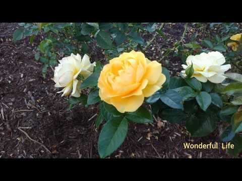 In  Sydney Royal Botanic Gardens Walking  Among Beautiful Flowers