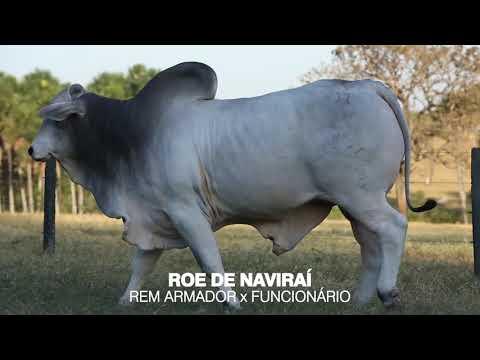LOTE 09 - ROE DE NAVIRAÍ