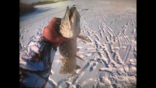 Щука по перволедке разведка по Налиму Рыбалка на Р Ишим Рыбалка по твердой воде 2020 2021